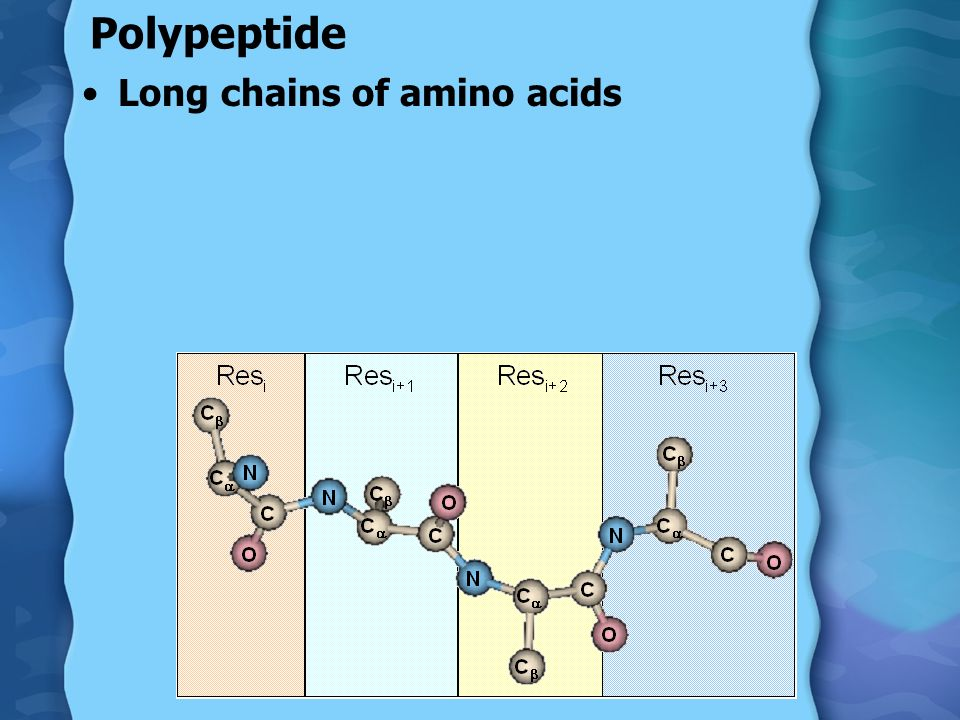 Polypeptide Long chains of amino acids