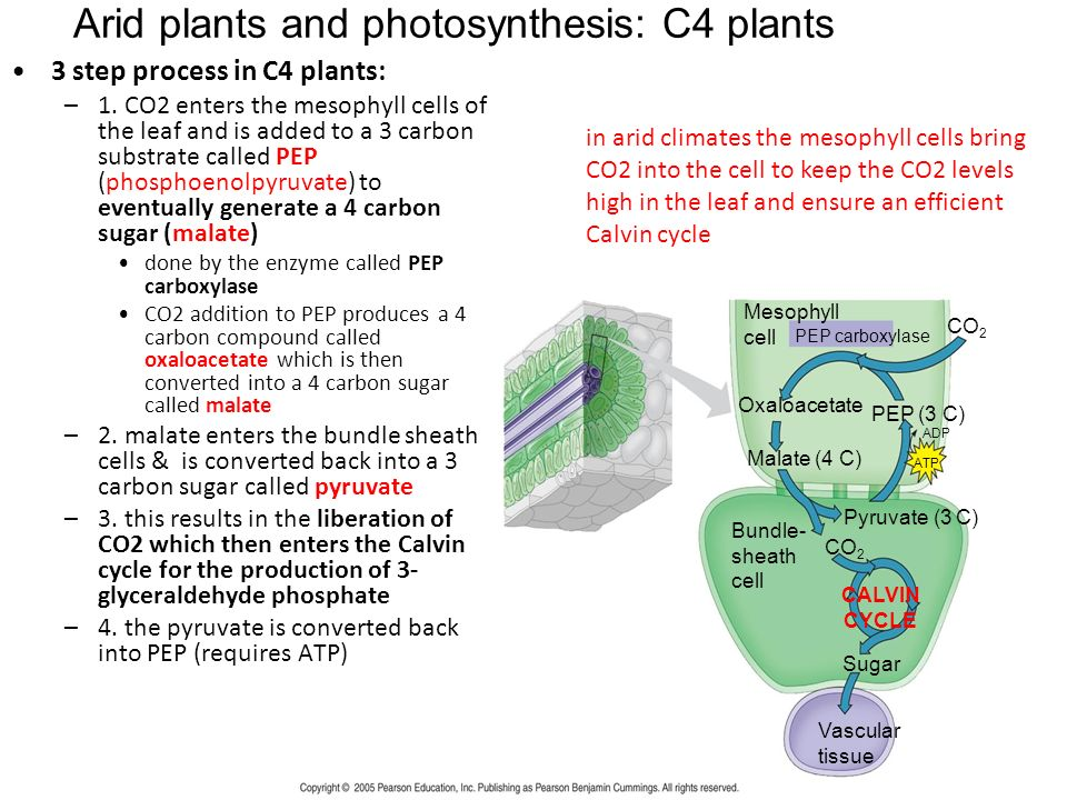 Lecture #9 Photosynthesis. 6 CO H 2 O + Light energy  C 6 H 12 ...