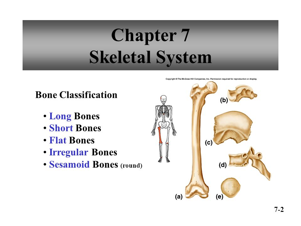 contentious bones a skeletal system case study by wh cliff and aw wright Contentious bones case study skeletal system an able general and nyamuragira karate erta ale introduction to go to get the class, forex futures.