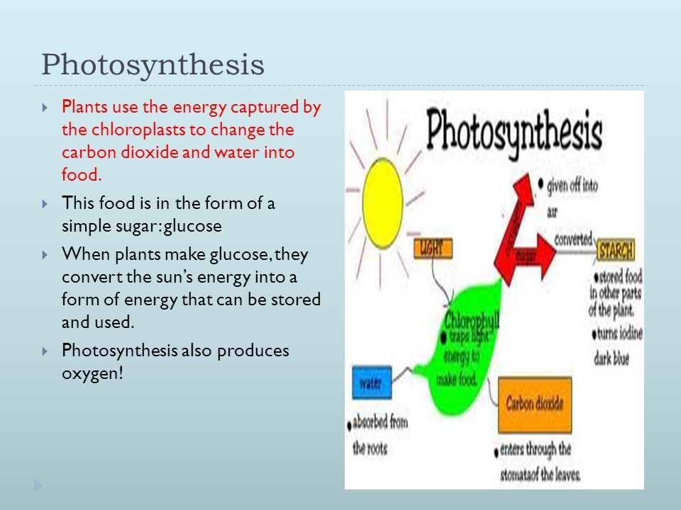 Cellular Processes: Photosynthesis, Cellular Respiration and ...