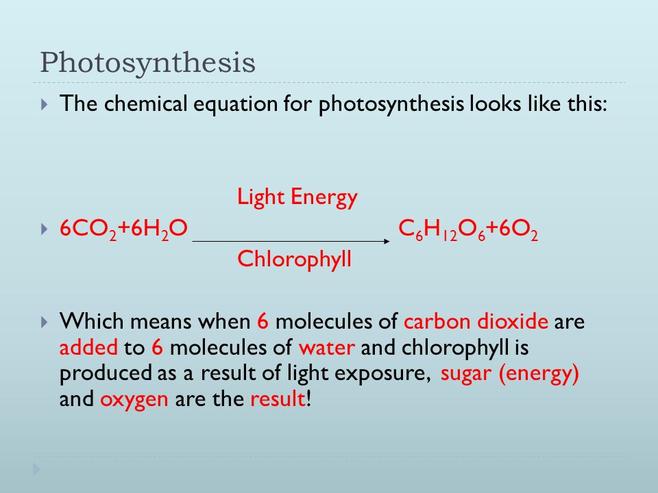 What does the photosynthesis equation mean the challenge hypothesis