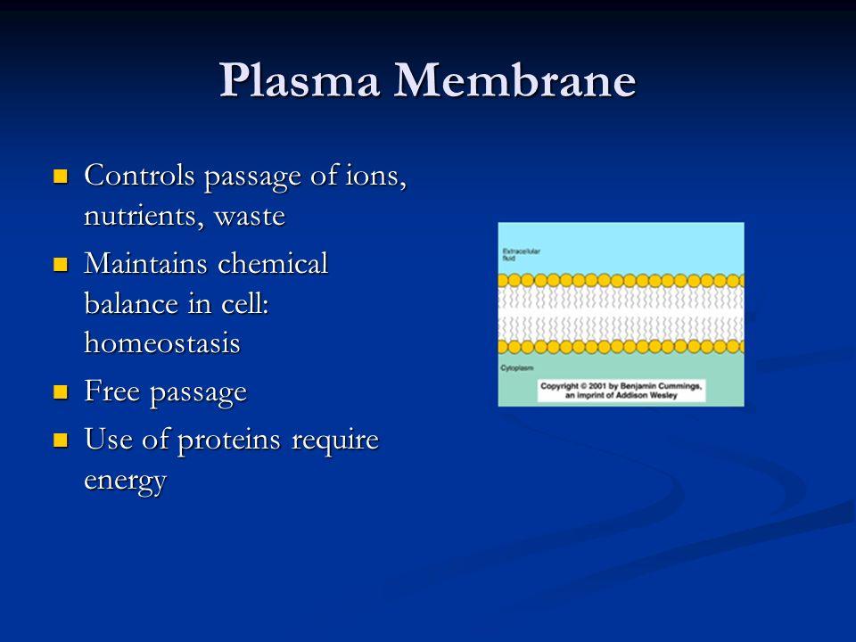 structure of plasma membrane essay