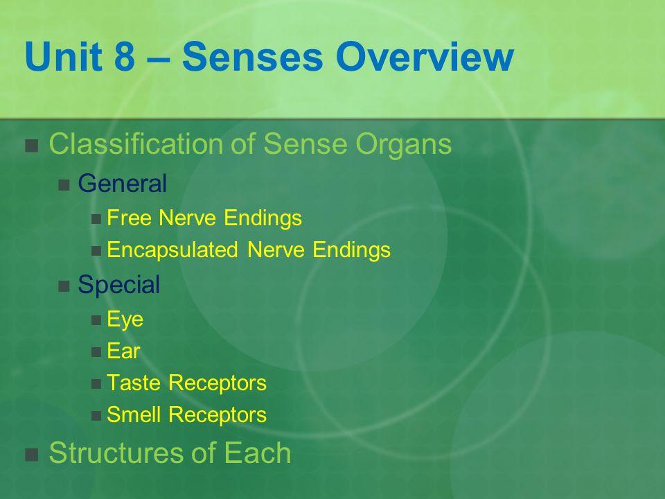 Anatomy & Physiology I The Senses Seminar 8. Unit 8 – Senses ...