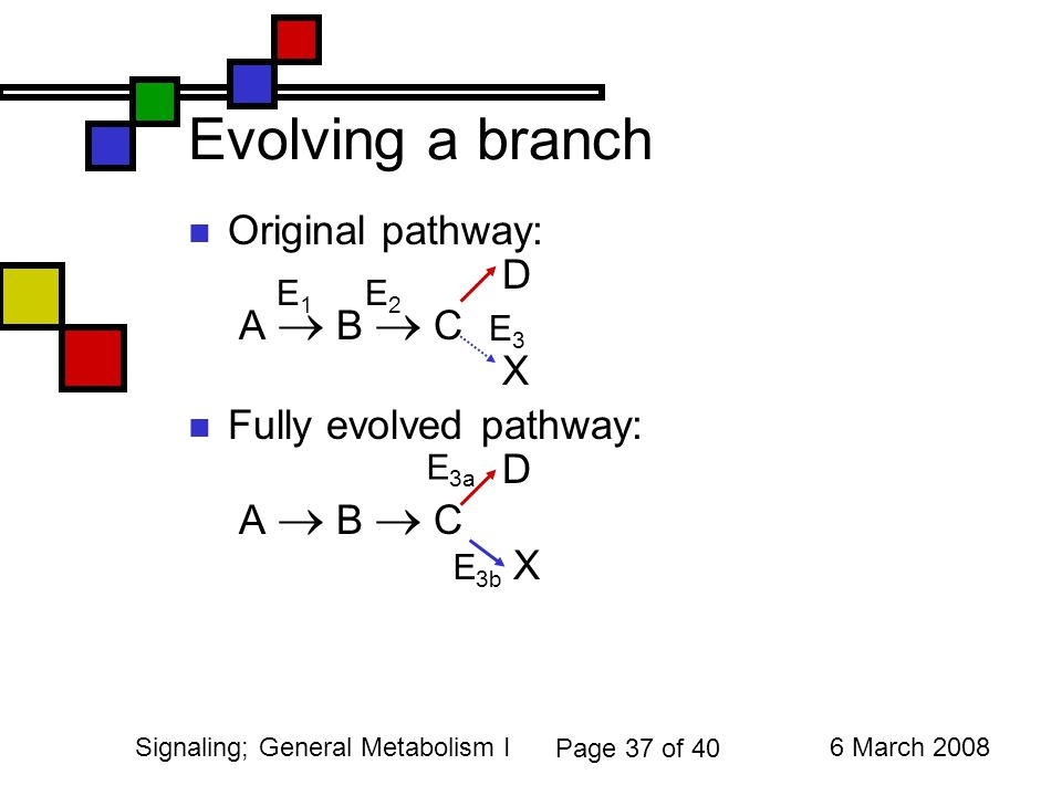 37 6 March 2008Signaling General Metabolism I Page Of 40 Evolving A Branch Original Pathway D B C X Fully Evolved E1E1