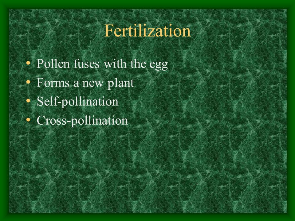 Fertilization Pollen fuses with the egg Forms a new plant Self-pollination Cross-pollination