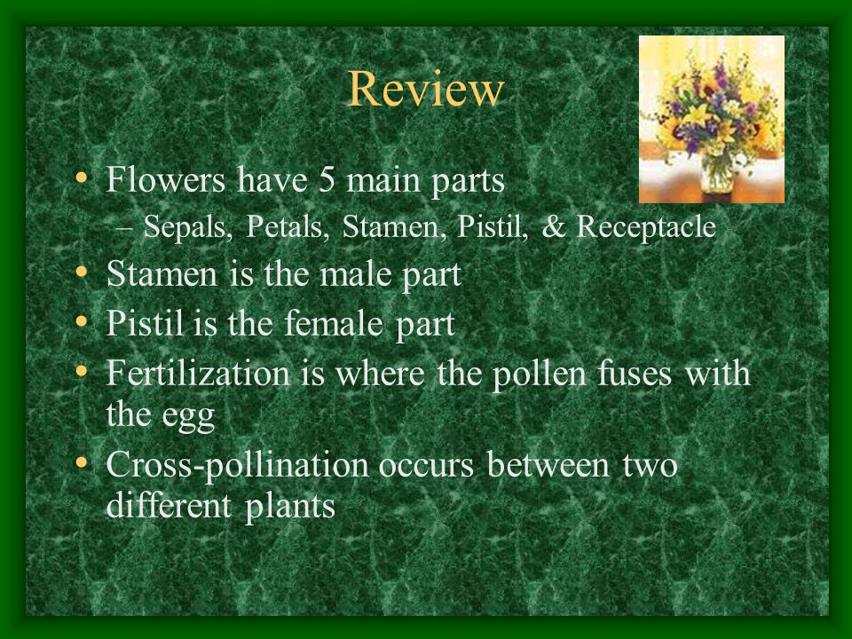 Review Flowers have 5 main parts –Sepals, Petals, Stamen, Pistil, & Receptacle Stamen is the male part Pistil is the female part Fertilization is where the pollen fuses with the egg Cross-pollination occurs between two different plants