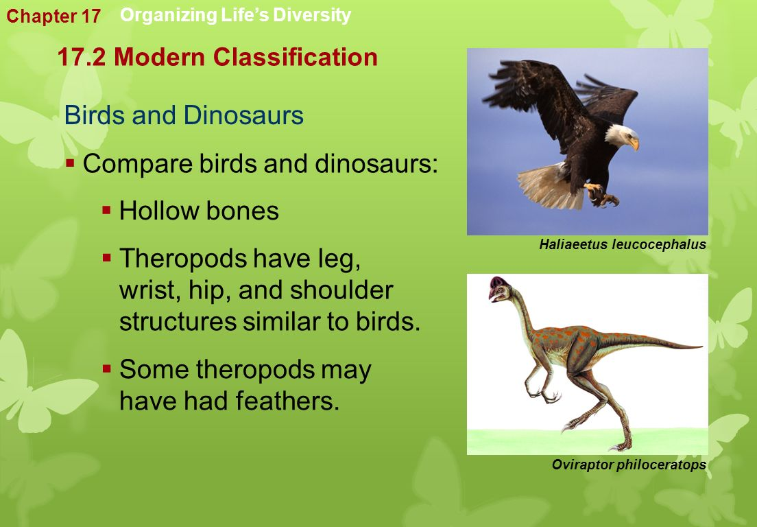 Birds and Dinosaurs Organizing Life's Diversity  Compare birds and dinosaurs:  Hollow bones  Theropods have leg, wrist, hip, and shoulder structures similar to birds.
