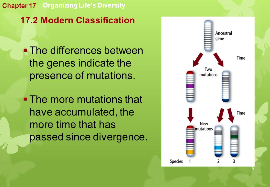 Organizing Life's Diversity  The differences between the genes indicate the presence of mutations.