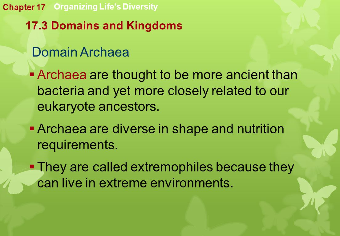 Domain Archaea  Archaea are thought to be more ancient than bacteria and yet more closely related to our eukaryote ancestors.