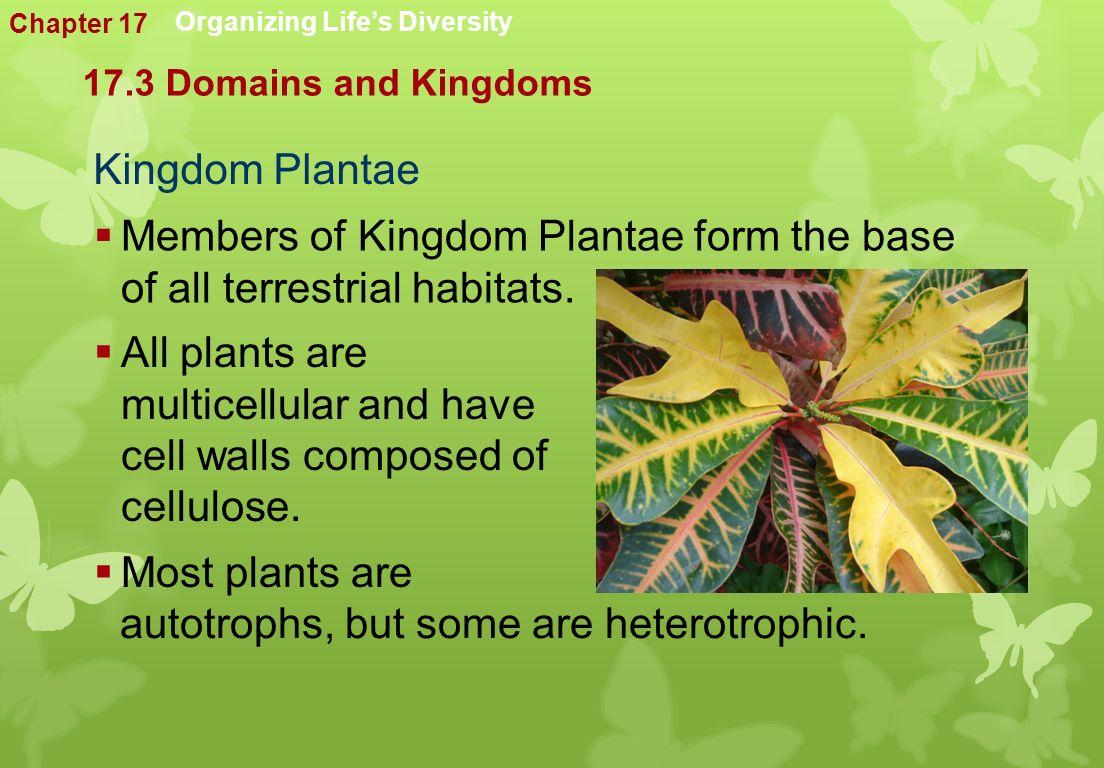 Kingdom Plantae  Members of Kingdom Plantae form the base of all terrestrial habitats.