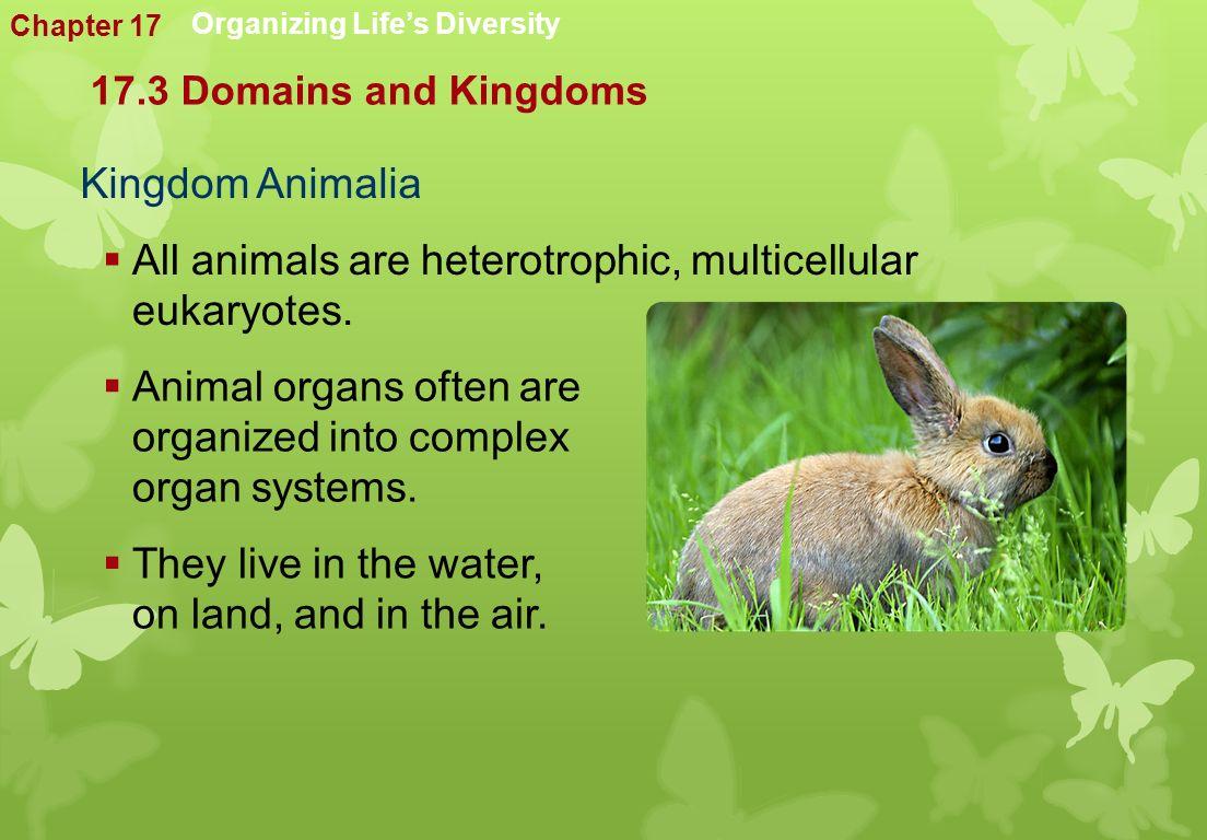 Kingdom Animalia  All animals are heterotrophic, multicellular eukaryotes.