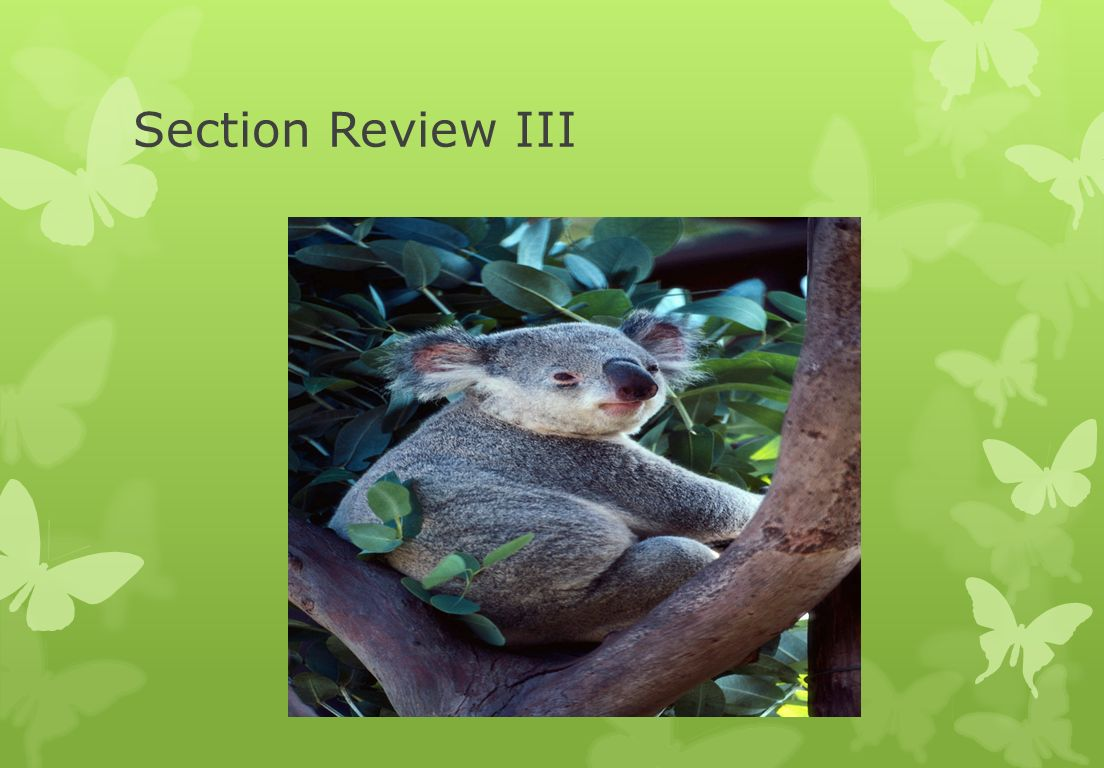 Section Review III
