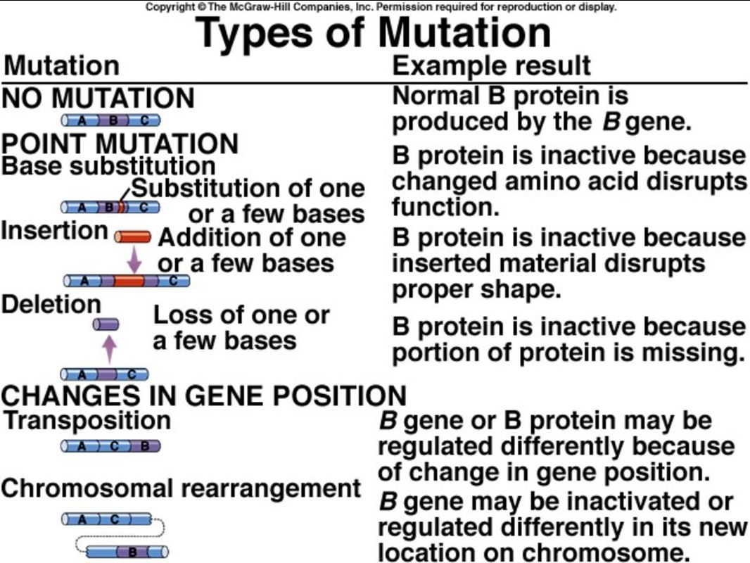 Review 4 heredity molecular genetics ap biology ppt download 35 biotechnology robcynllc Images