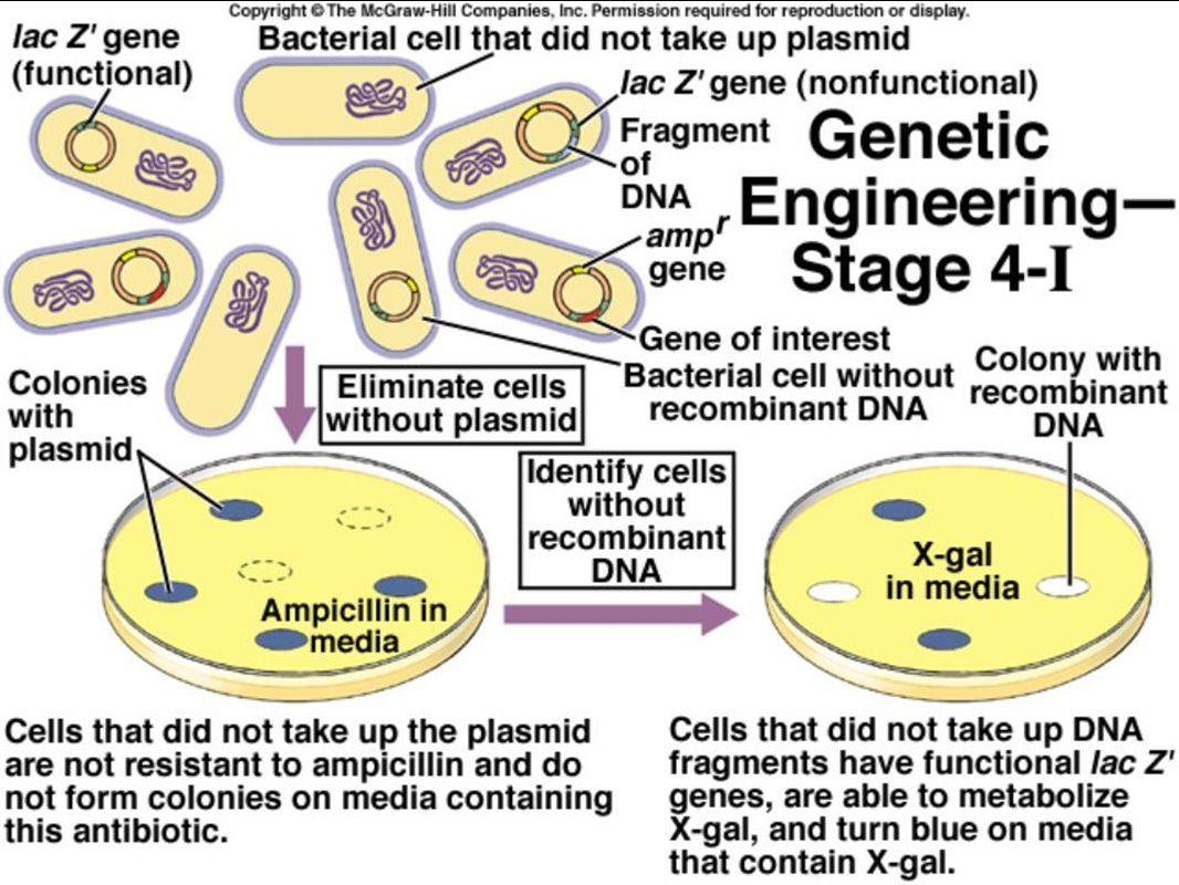 ap biology molecular genetics dbq