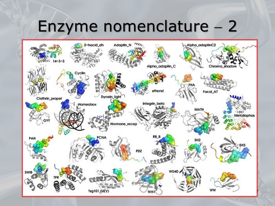 17 Enzyme nomenclature  2