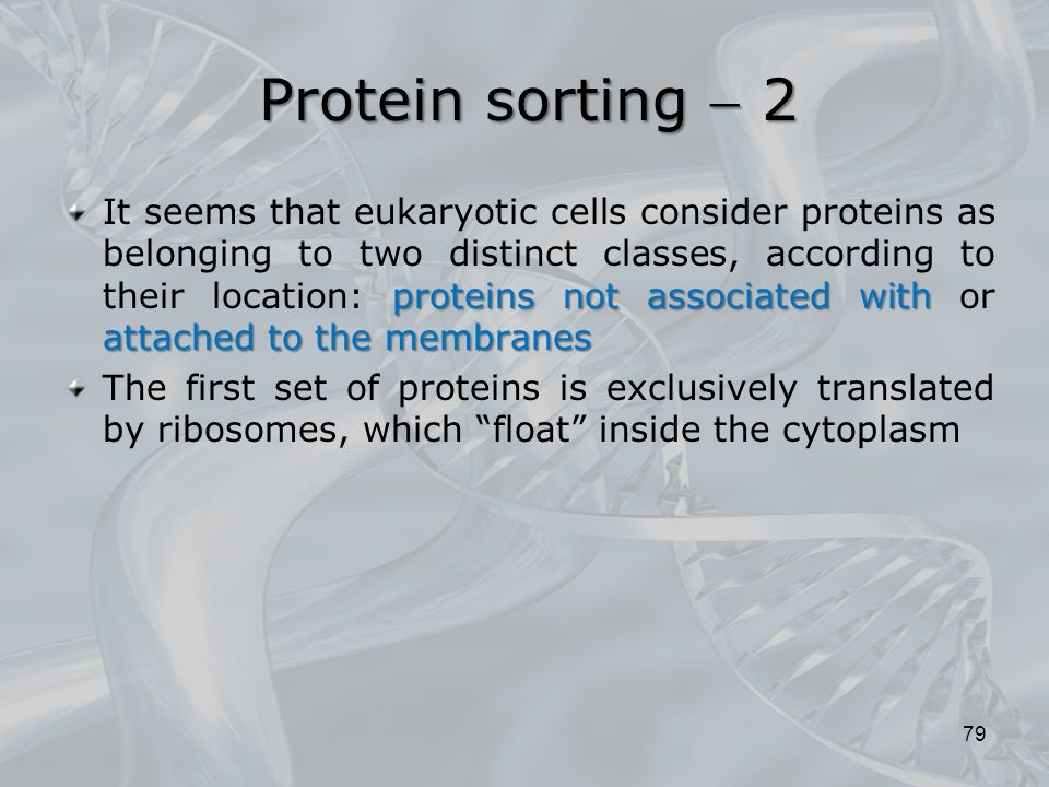 proteins not associated with attached to the membranes It seems that eukaryotic cells consider proteins as belonging to two distinct classes, according to their location: proteins not associated with or attached to the membranes The first set of proteins is exclusively translated by ribosomes, which float inside the cytoplasm 79 Protein sorting  2