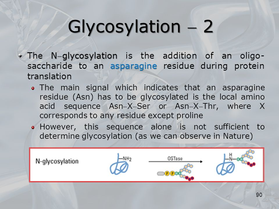 Nglycosylation asparagine The Nglycosylation is the addition of an oligo- saccharide to an asparagine residue during protein translation The main signal which indicates that an asparagine residue (Asn) has to be glycosylated is the local amino acid sequence AsnXSer or AsnXThr, where X corresponds to any residue except proline However, this sequence alone is not sufficient to determine glycosylation (as we can observe in Nature) 90 Glycosylation  2