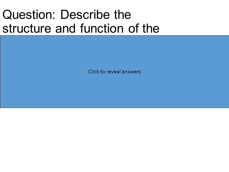 Question: Describe the structure and function of the glycocalyx (3) Consists of glycoproteins Which are proteins with added carbohydrate chains Used for cell recognition/receptors Click here to hide answers Click to reveal answers