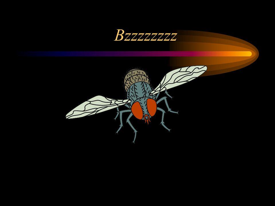 Bzzzzzzzz