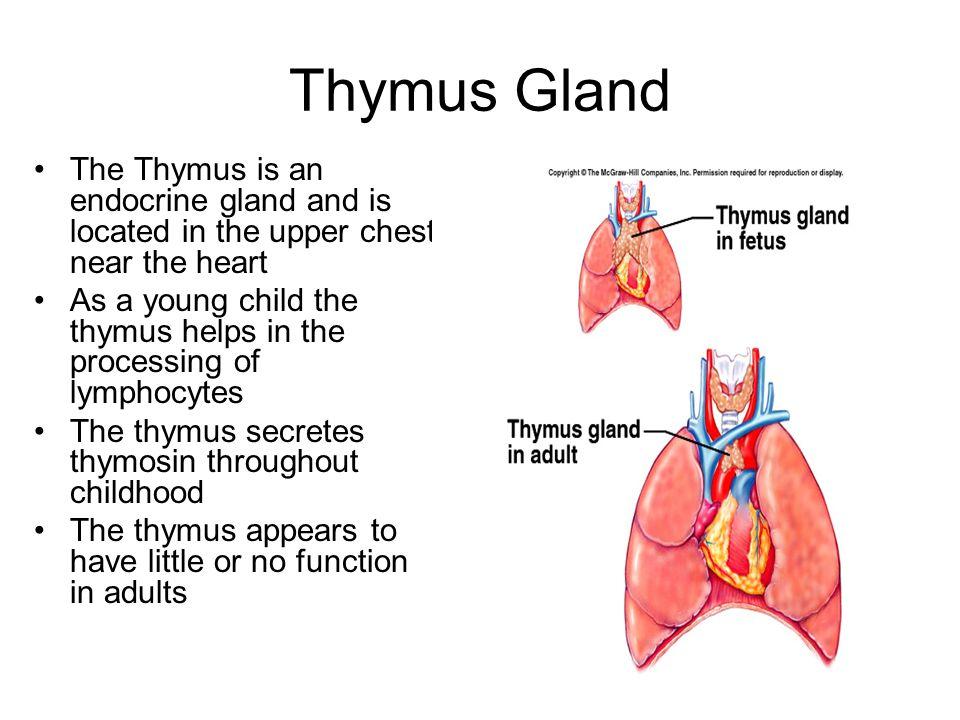 Ziemlich Anatomie Des Thymus Bilder - Menschliche Anatomie Bilder ...