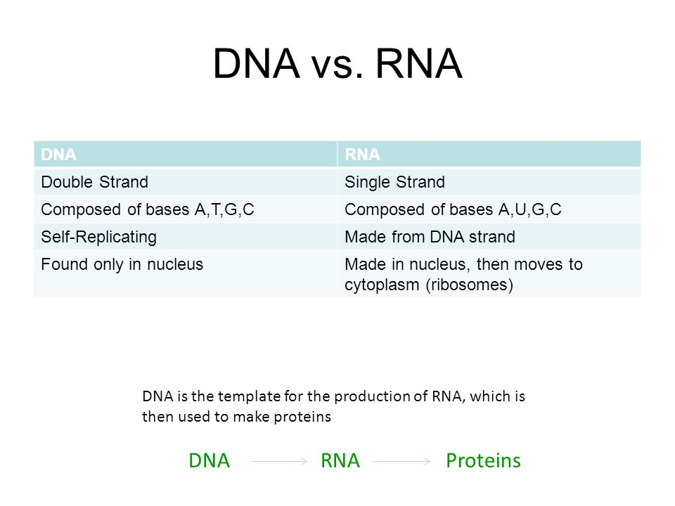 Printables Dna And Rna Worksheet Answers dna and rna worksheet davezan collection of bloggakuten