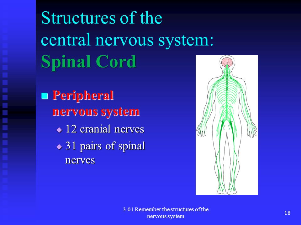 the nervous system ppt Diseases of the nervous system 2 meningococcal meningitis a) greatly feared because it can result in shock and death within 24 hours after infection.