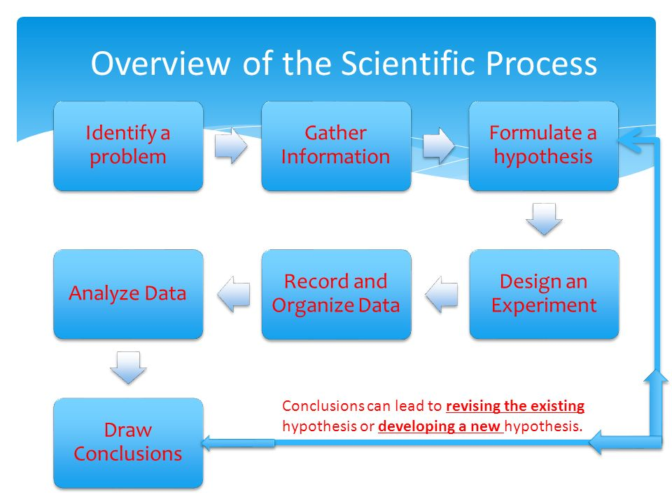 Identify a problem Gather Information Formulate a hypothesis Design an Experiment Record and Organize Data Analyze Data Draw Conclusions Overview of the Scientific Process Conclusions can lead to revising the existing hypothesis or developing a new hypothesis.