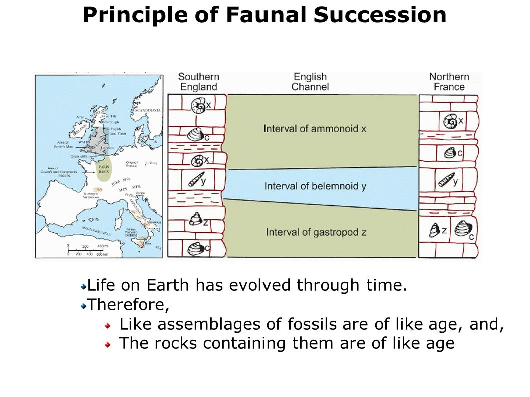 principals of fossil succession essay The principle of faunal succession the fossil content of rocks together with the law of superposition helps to determine the time sequence in which.