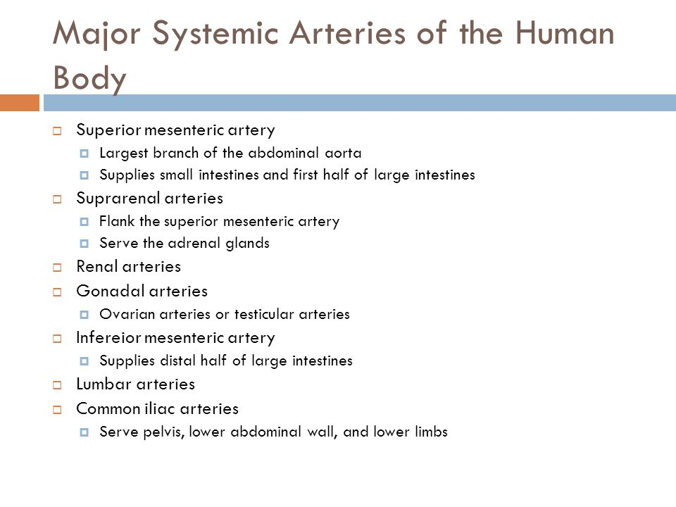 Major Systemic Arteries of the Human Body  Superior mesenteric artery  Largest branch of the abdominal aorta  Supplies small intestines and first half of large intestines  Suprarenal arteries  Flank the superior mesenteric artery  Serve the adrenal glands  Renal arteries  Gonadal arteries  Ovarian arteries or testicular arteries  Infereior mesenteric artery  Supplies distal half of large intestines  Lumbar arteries  Common iliac arteries  Serve pelvis, lower abdominal wall, and lower limbs