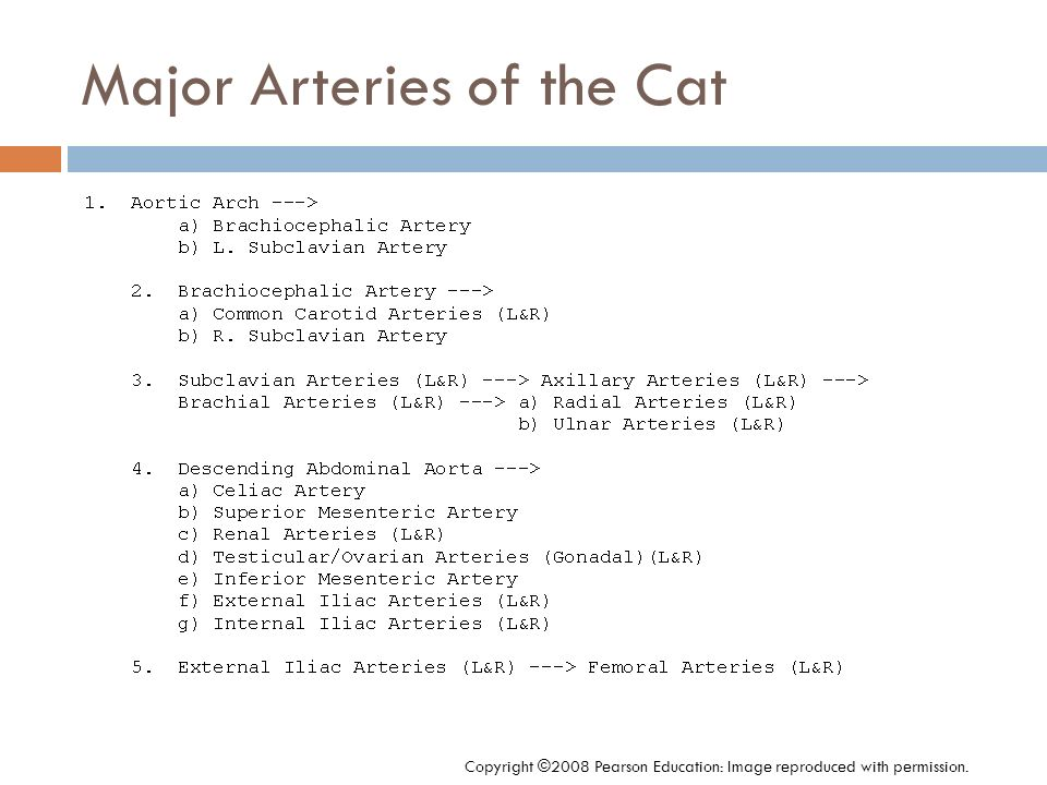 Major Arteries of the Cat Copyright ©2008 Pearson Education: Image reproduced with permission.