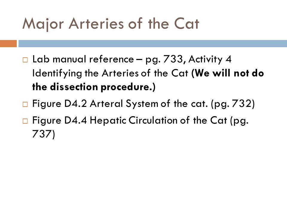 Major Arteries of the Cat  Lab manual reference – pg.