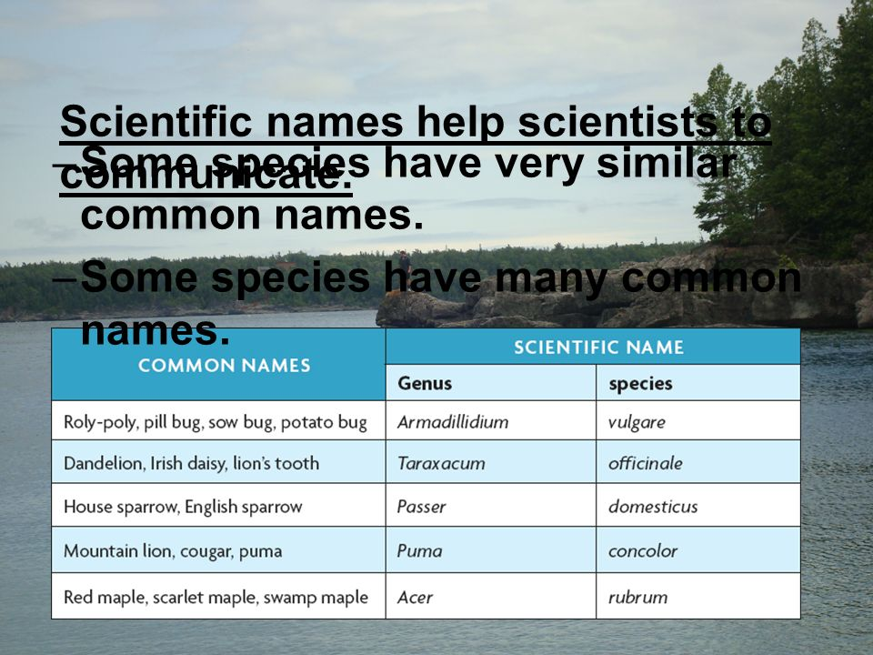 Scientific names help scientists to communicate. –Some species have very similar common names.