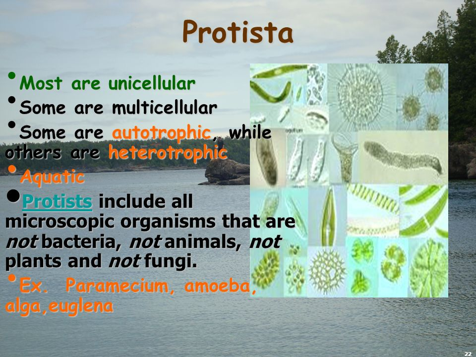 22 Protista Most are unicellular Most are unicellular Some are multicellular Some are multicellular Some are autotrophic, while others are heterotrophic Some are autotrophic, while others are heterotrophic Aquatic Aquatic Protists include all microscopic organisms that are not bacteria, not animals, not plants and not fungi.