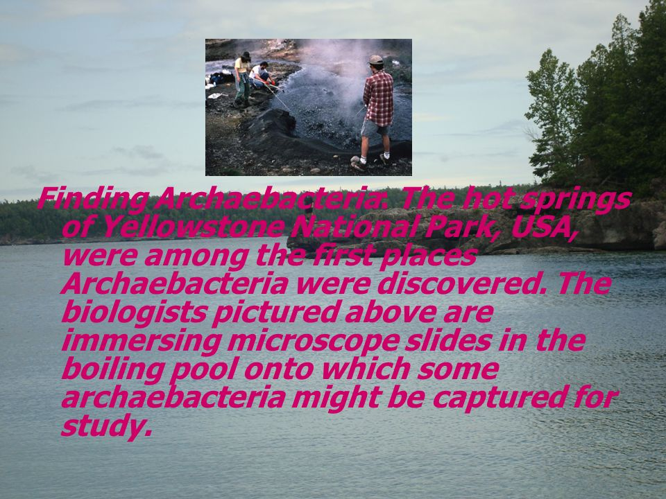 Finding Archaebacteria: The hot springs of Yellowstone National Park, USA, were among the first places Archaebacteria were discovered.