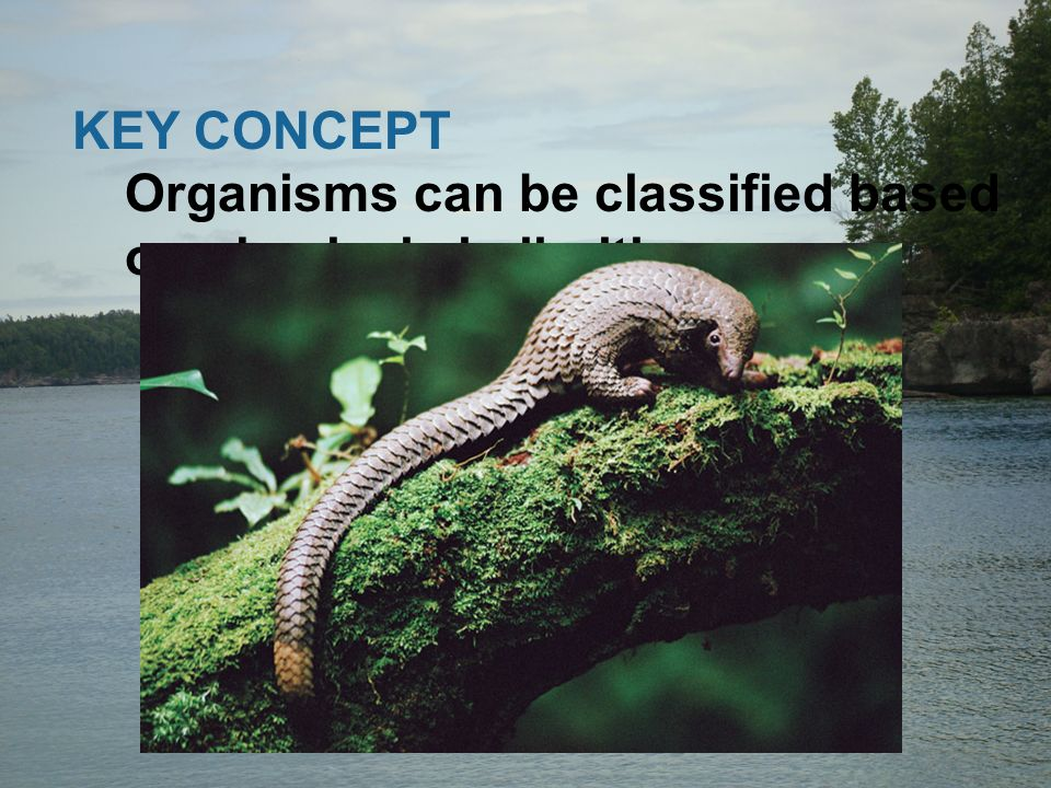 KEY CONCEPT Organisms can be classified based on physical similarities.
