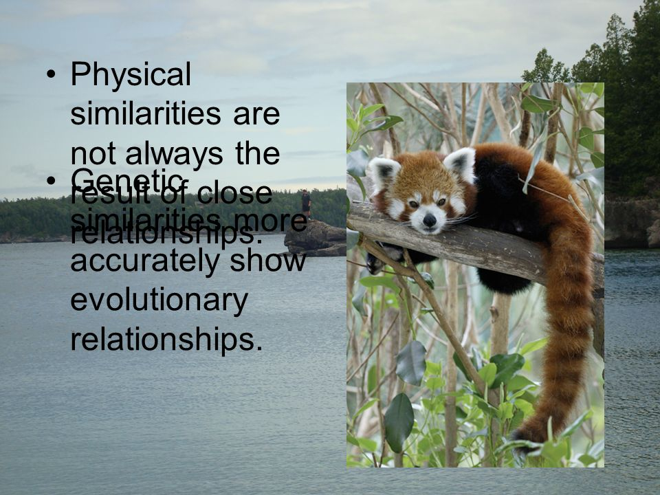Physical similarities are not always the result of close relationships.