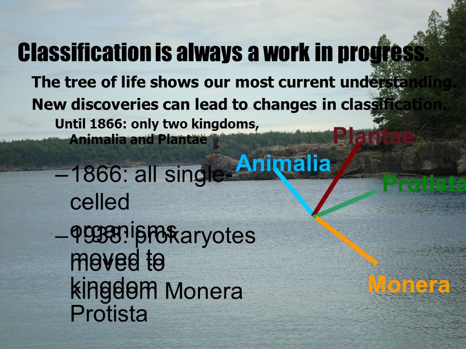 Classification is always a work in progress. The tree of life shows our most current understanding.