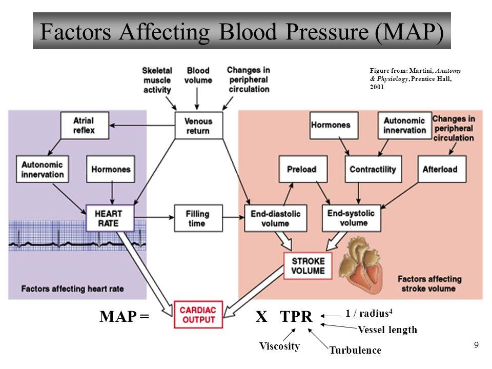 Groß Blood Pressure Anatomy And Physiology Zeitgenössisch ...