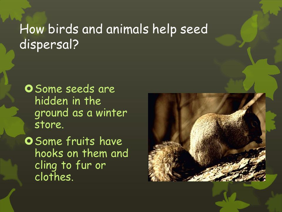 Seed dispersal Seeds are dispersed in many different ways:  Wind  Explosion  Water  Animals  Birds  Scatter
