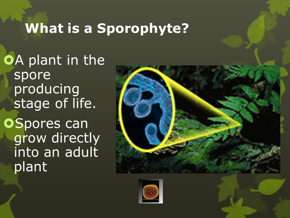 Plant Characteristics  Plants reproduce by spores or seeds.