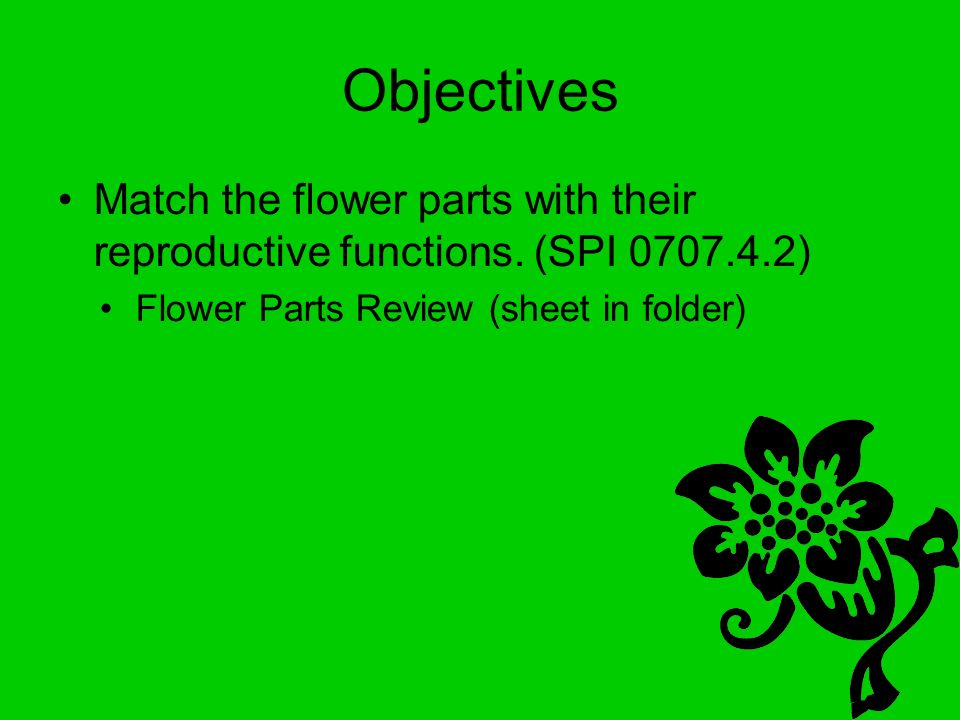 Objectives Match the flower parts with their reproductive functions.