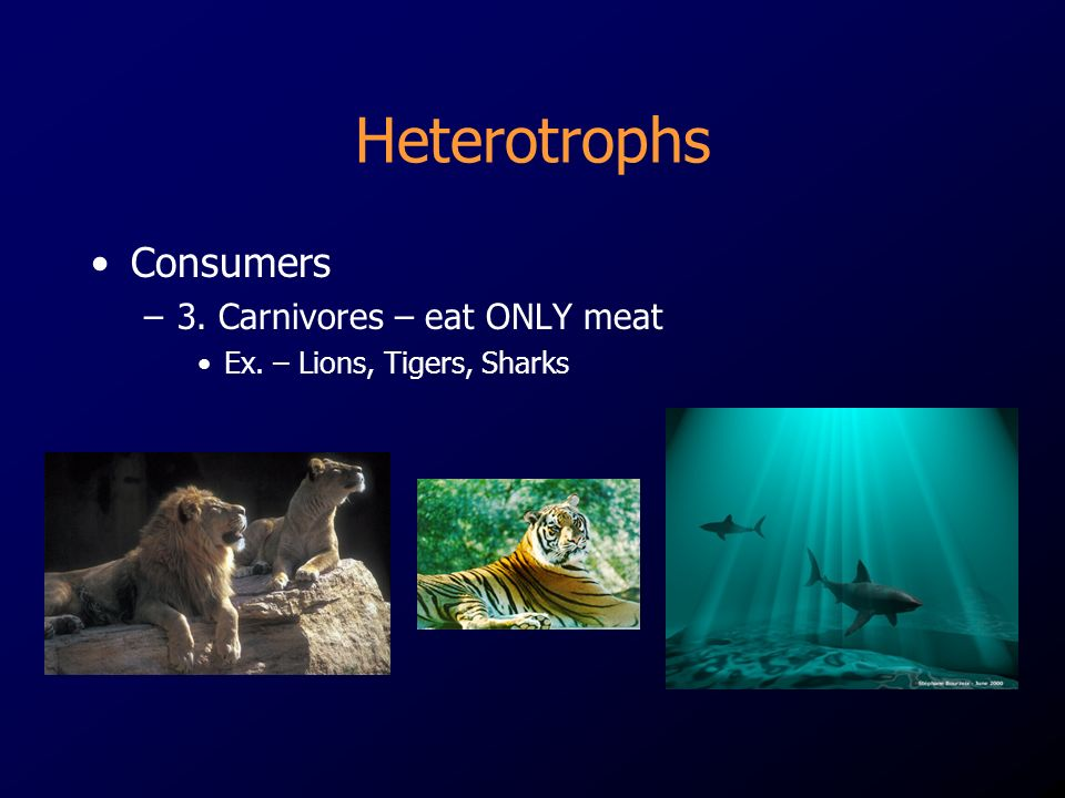Heterotrophs Consumers –3. Carnivores – eat ONLY meat Ex. – Lions, Tigers, Sharks