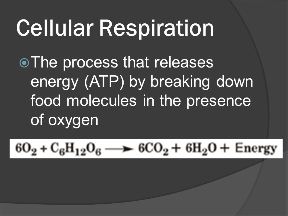 Cellular Respiration  The process that releases energy (ATP) by breaking down food molecules in the presence of oxygen