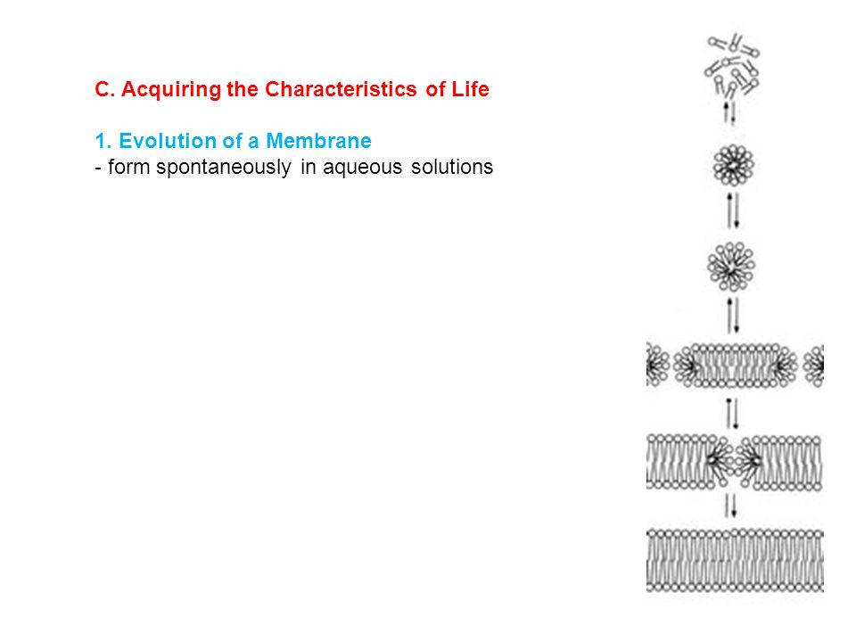 Cell Biology I. Overview II. Membranes: How Matter Get in and Out ...