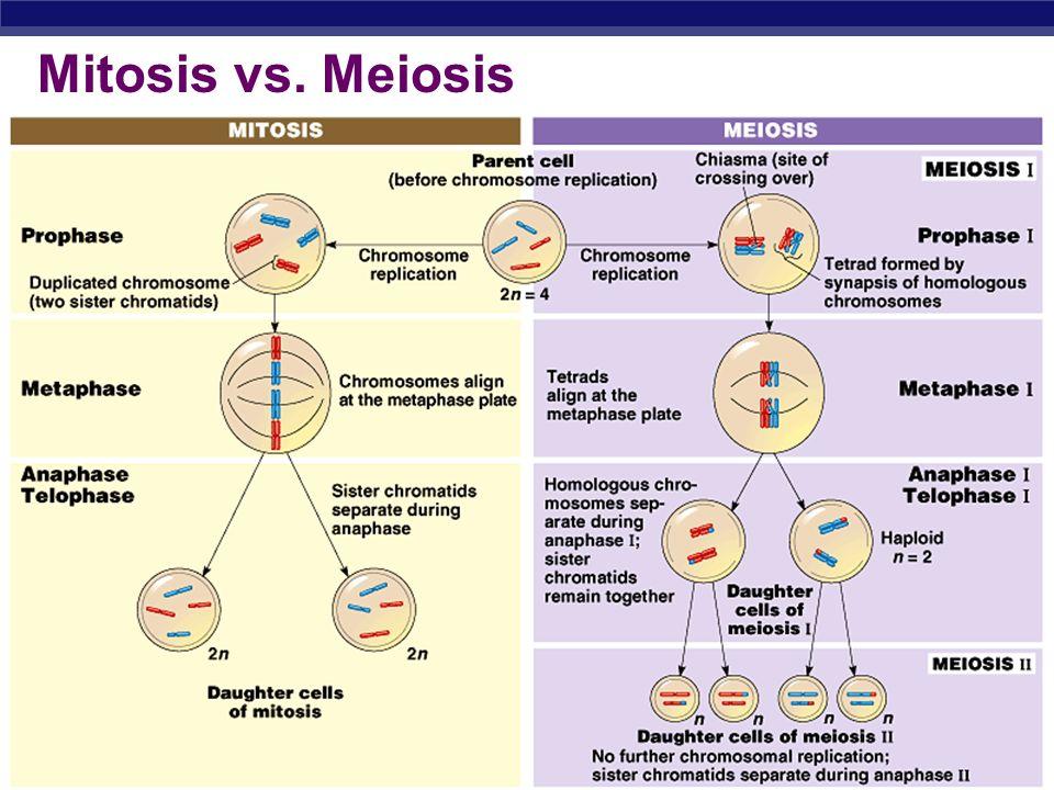 conclusion mitosis