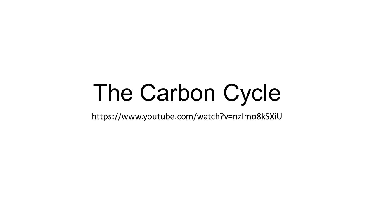 The Carbon Cycle   v=nzImo8kSXiU