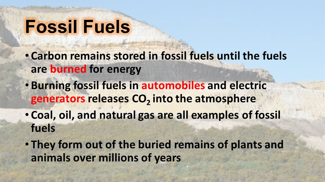 Carbon remains stored in fossil fuels until the fuels are burned for energy Burning fossil fuels in automobiles and electric generators releases CO 2 into the atmosphere Coal, oil, and natural gas are all examples of fossil fuels They form out of the buried remains of plants and animals over millions of years