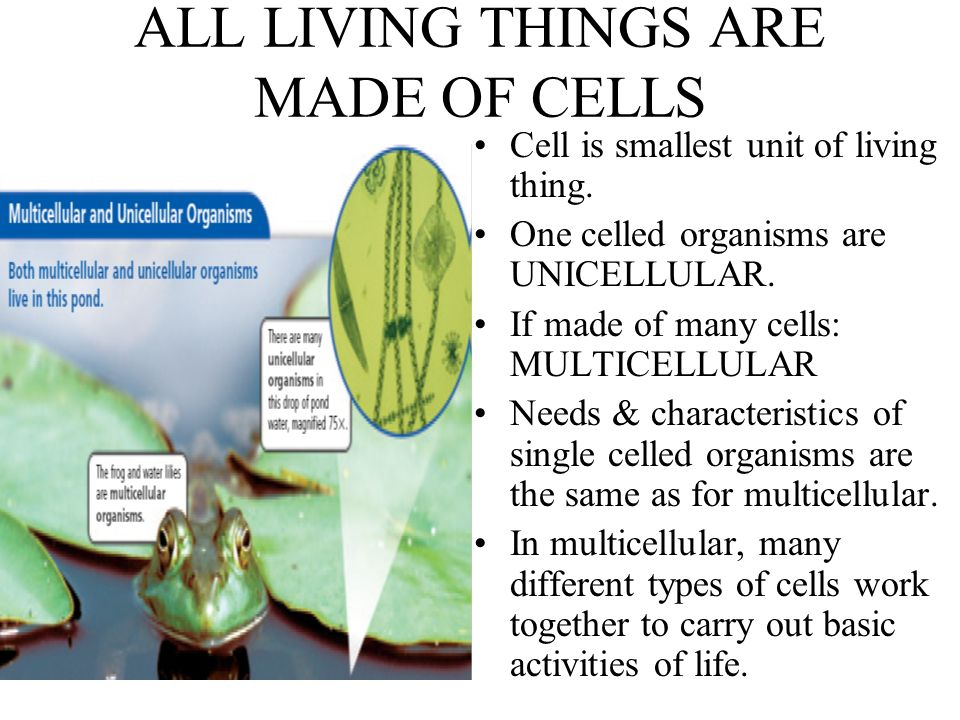 CELL IS BASIC UNIT OF LIVING THINGS Living Things are different ...