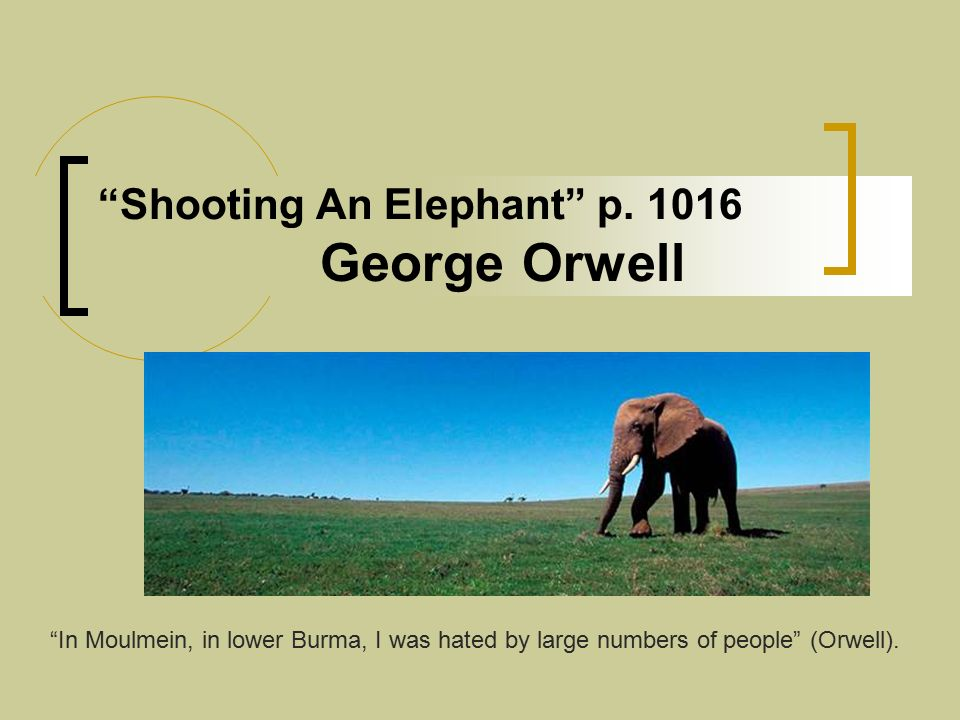 Essay Shooting An Elephant