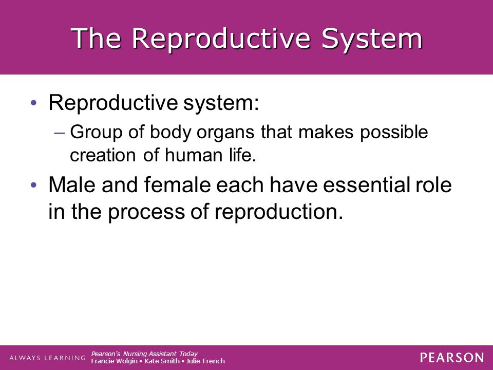 Pearson s Nursing Assistant Today Francie Wolgin Kate Smith Julie French The Reproductive System Reproductive system: –Group of body organs that makes possible creation of human life.